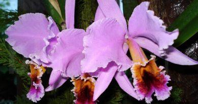 La Flor Nacional- Senderos