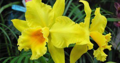 Orquídeas-Senderos