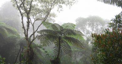 Biodiversidad venezolana-Senderos